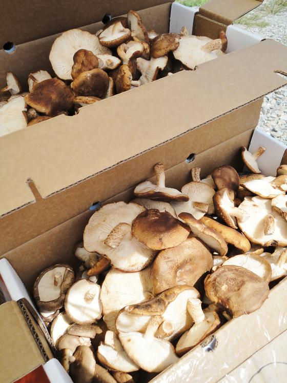 Locally foraged mushrooms from Fish Hawk Acres (Carrie Robinson)