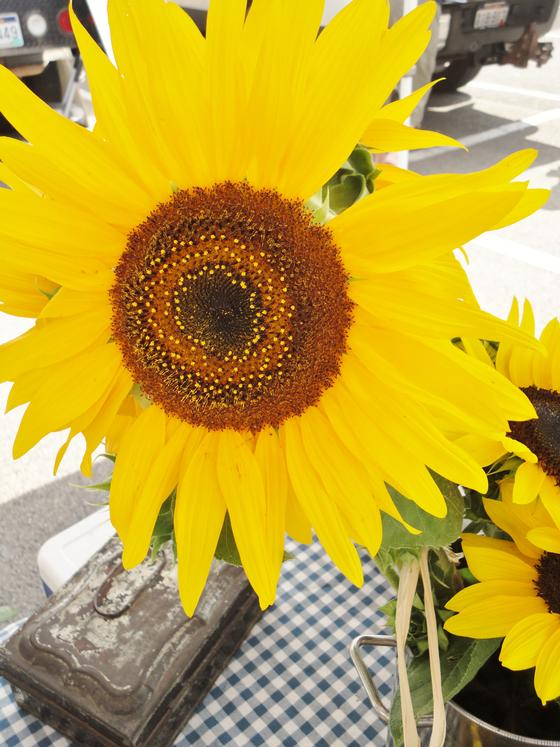 Bright and cherry sunflowers from Hawthorne Valley Farms (Carrie Robinson)